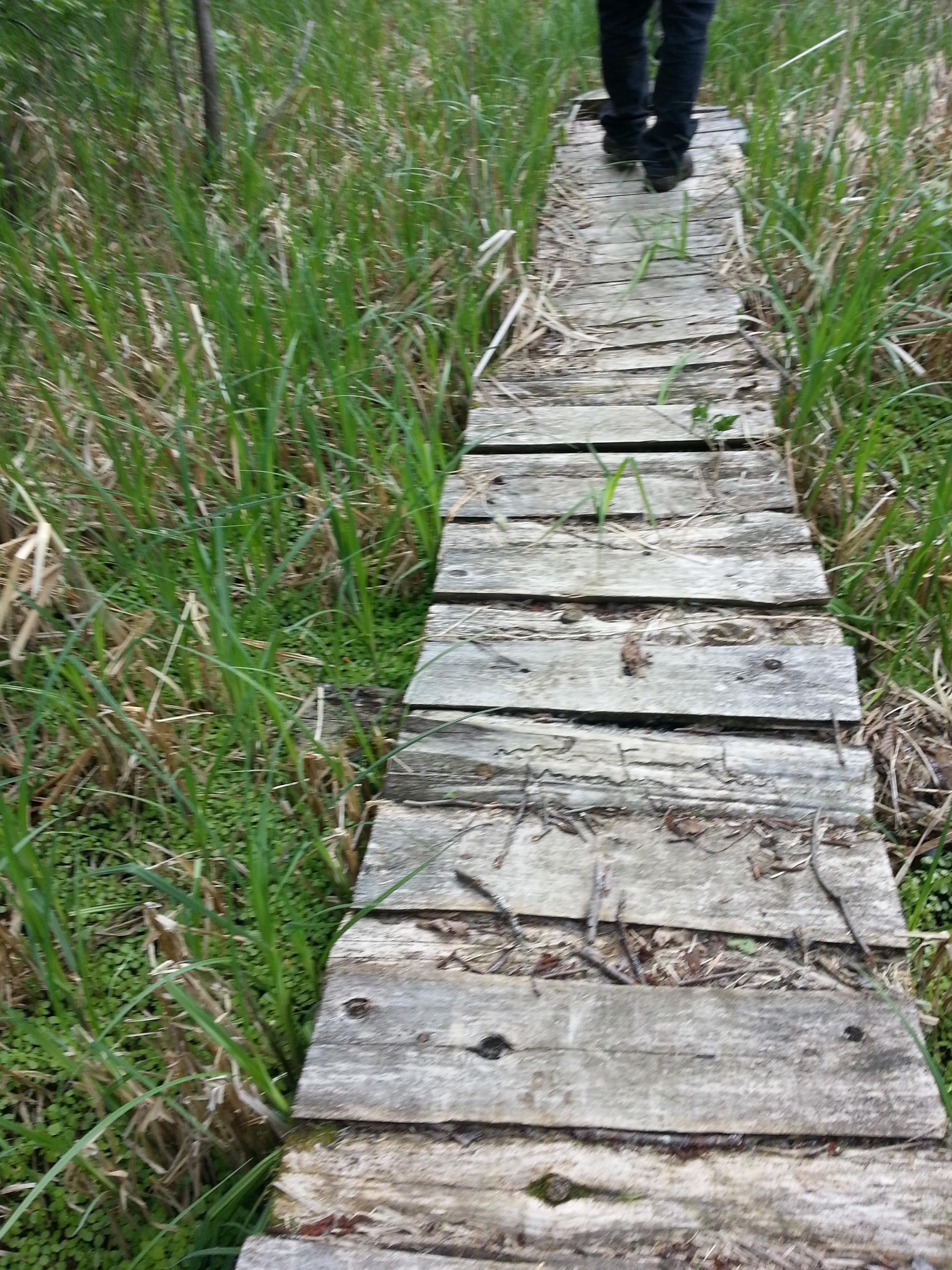 walkway to the teaching lodge through the wetland