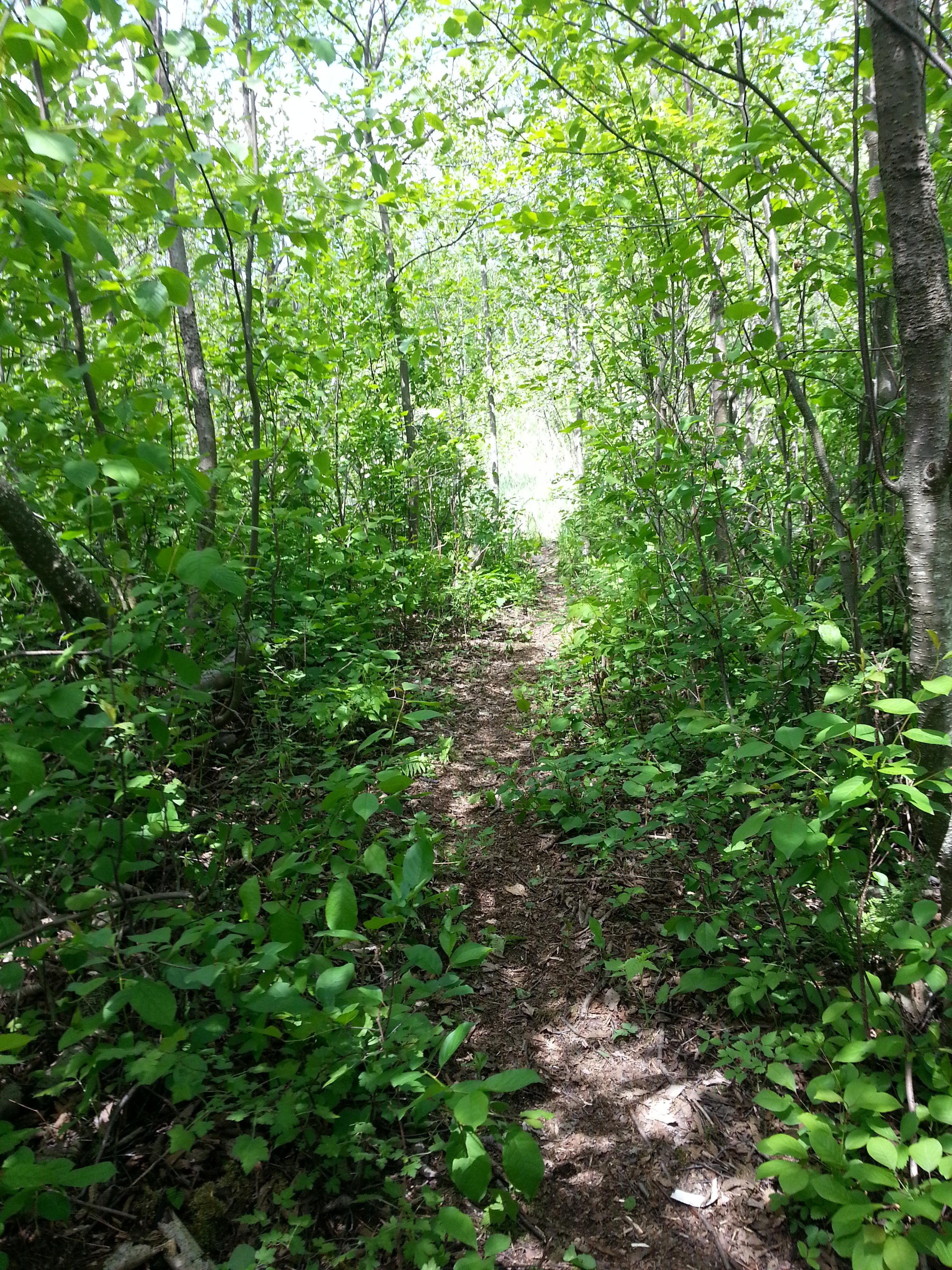 walkway to the teaching lodge