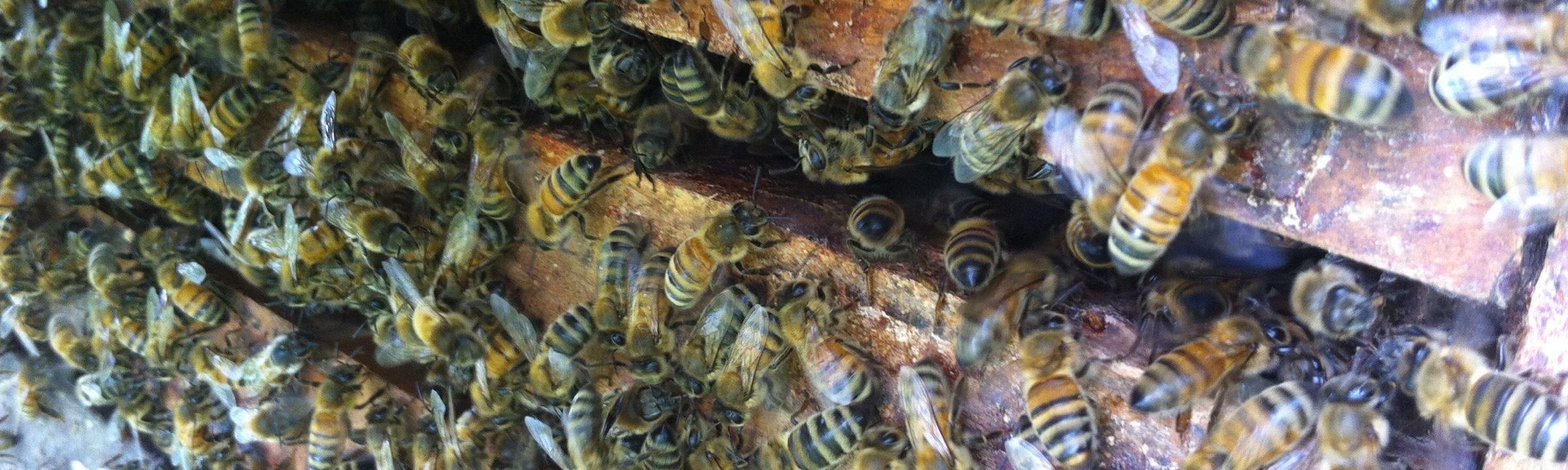 beekeeping steven martin thesacredgardener wild edibles permaculture