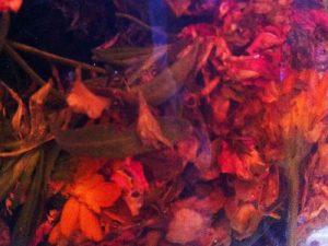 The Sacred Gardener, Herbal Toner